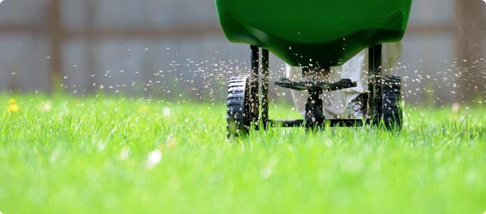 Image result for fertilize your lawn
